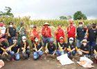 Bupati ROR Panen Jagung dan Resmikan UPPO di Sendangan Sonder
